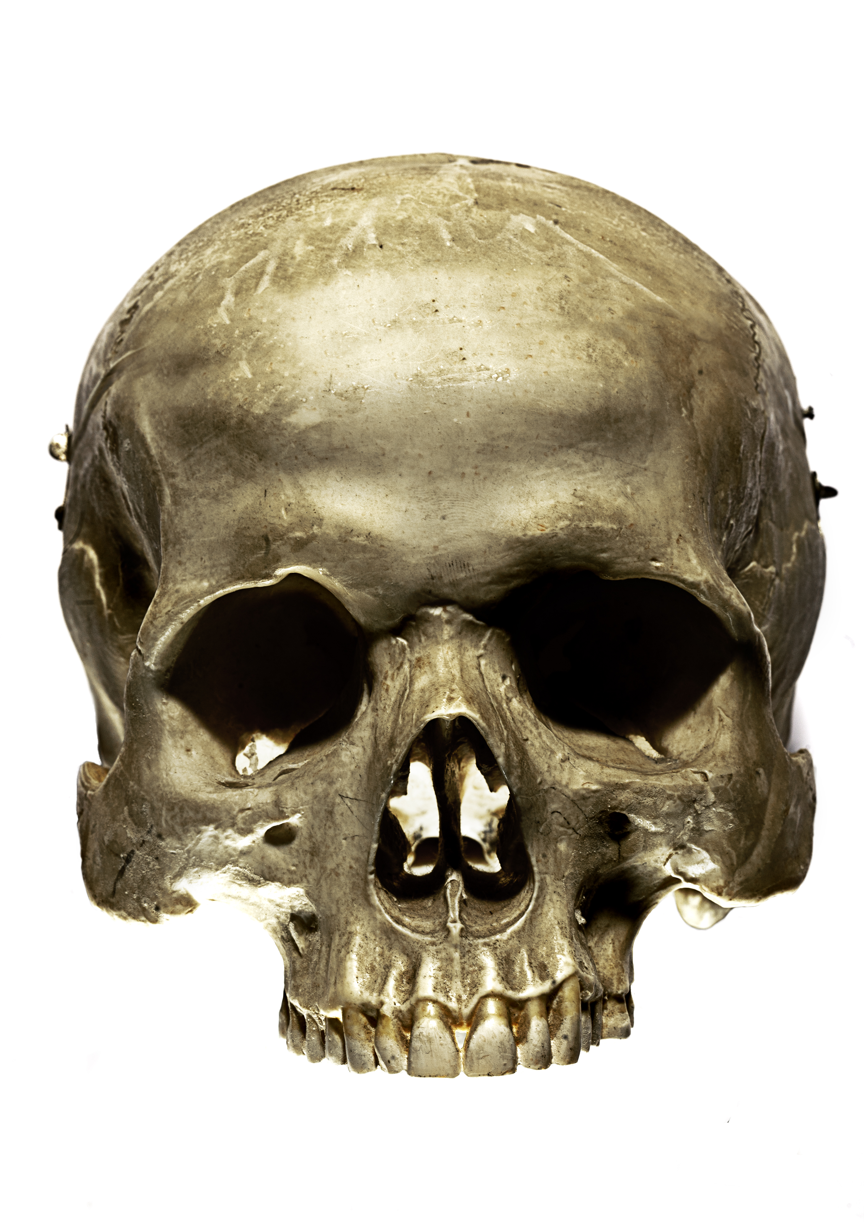 Skull Backgrounds on Wallpapers Vista