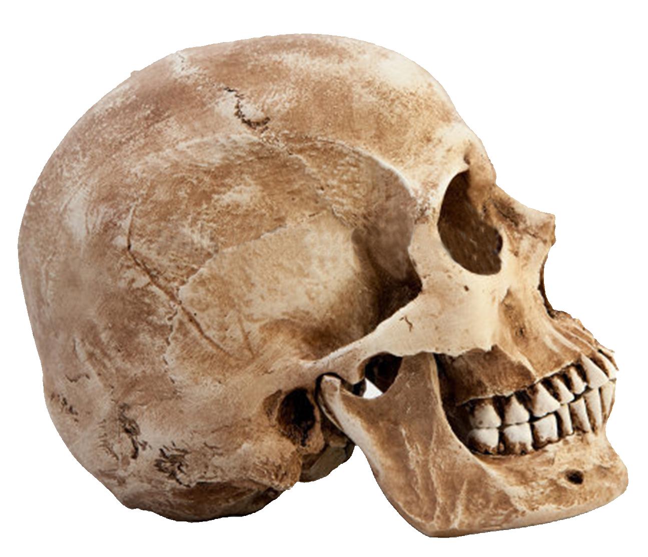 High Resolution Wallpaper | Skull 1295x1113 px