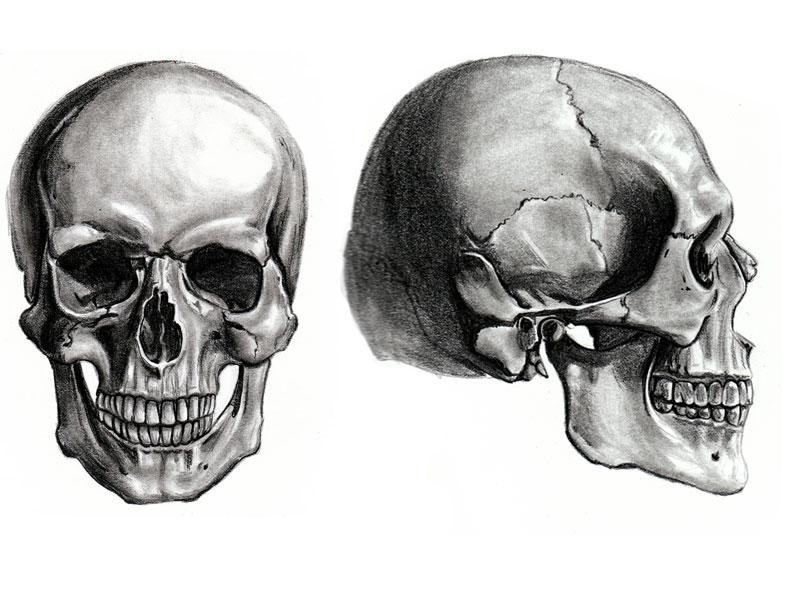 HQ Skull Wallpapers | File 90.2Kb