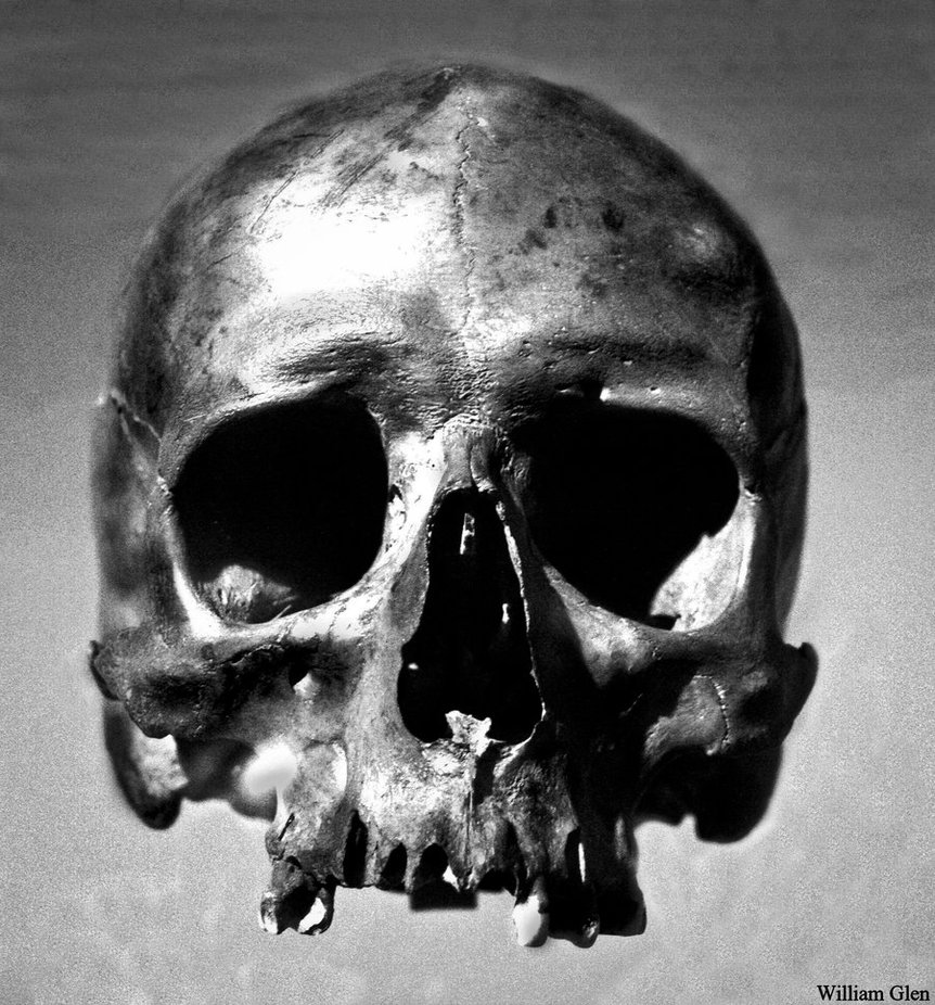 Images of Skull | 862x926