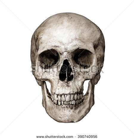 Amazing Skull Pictures & Backgrounds
