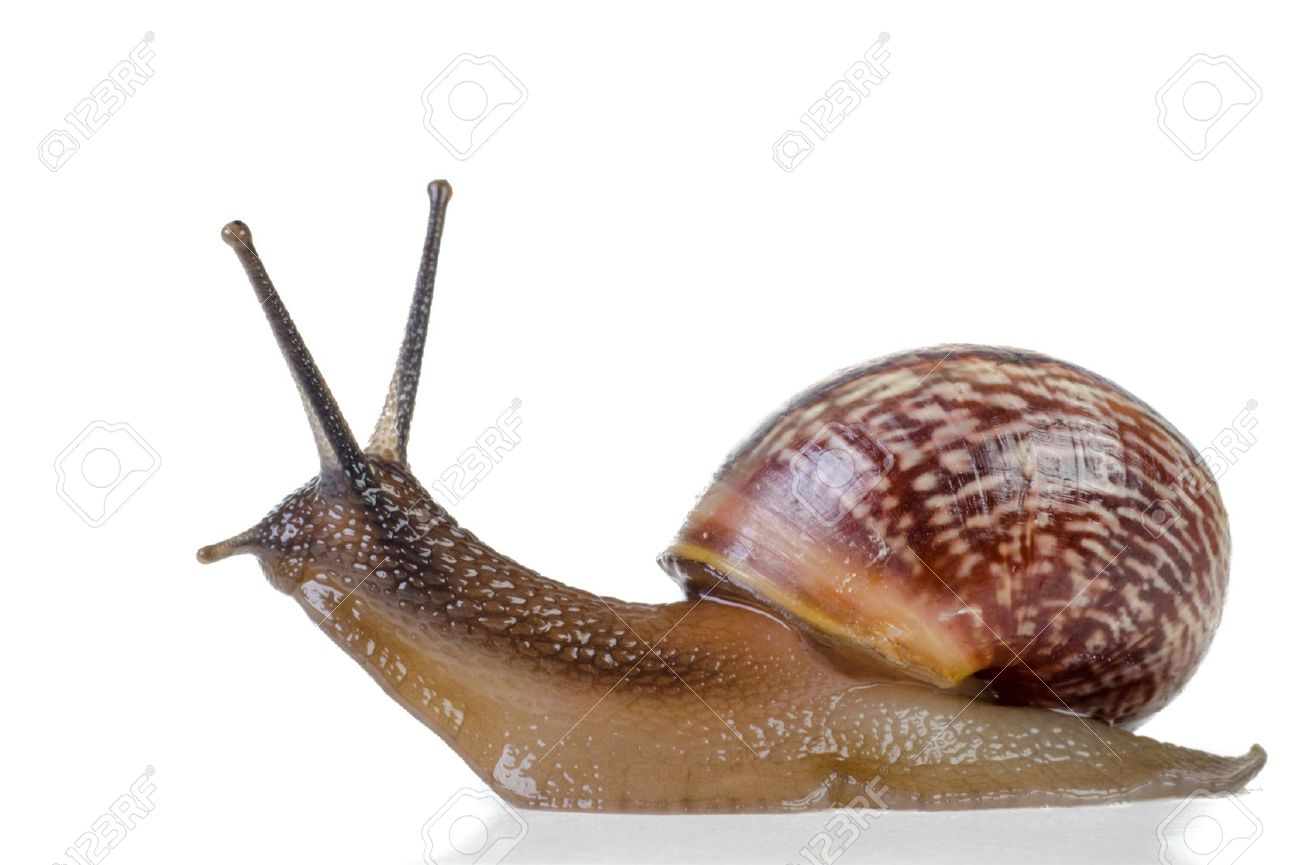 HQ Snail Wallpapers | File 88.27Kb