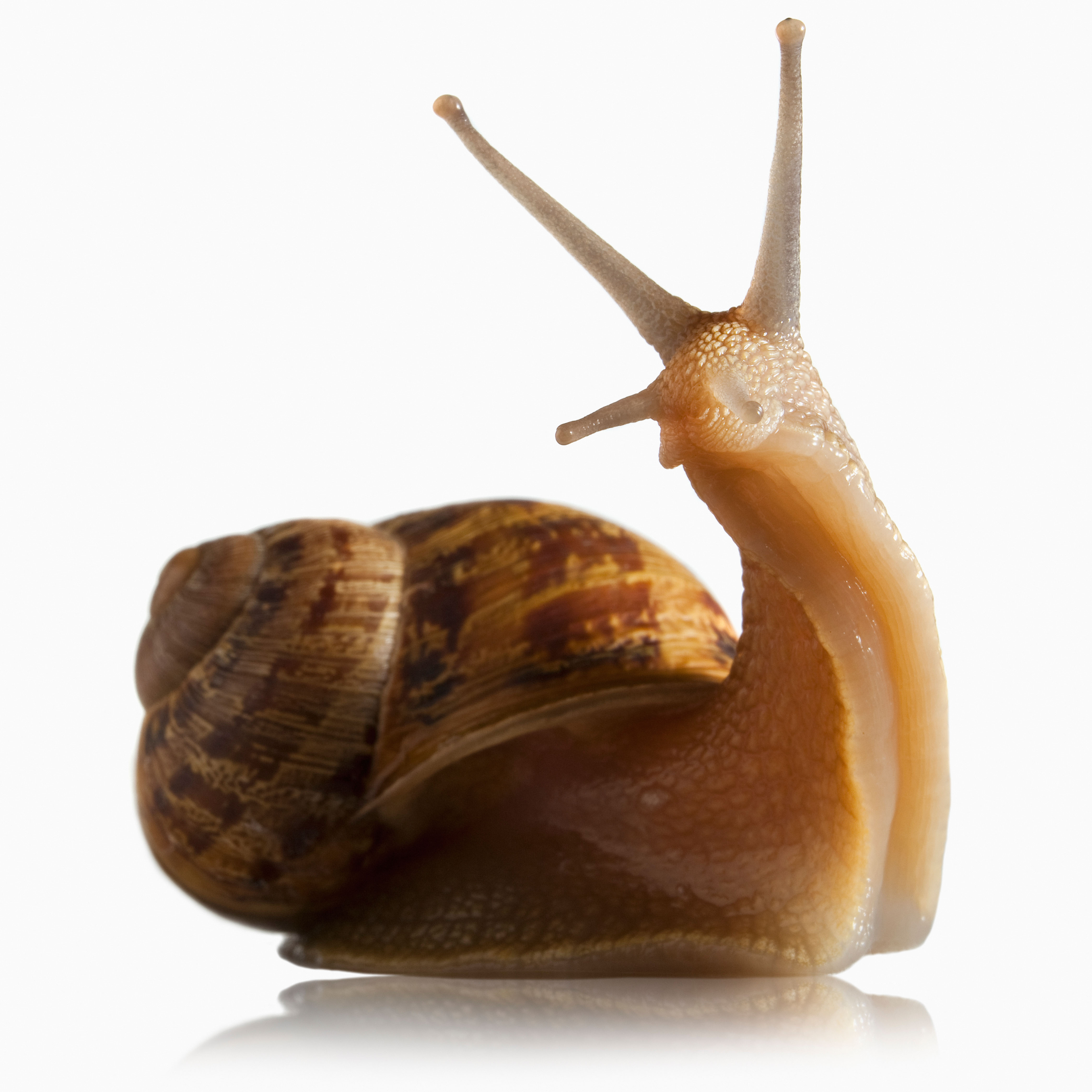 Snail Backgrounds on Wallpapers Vista