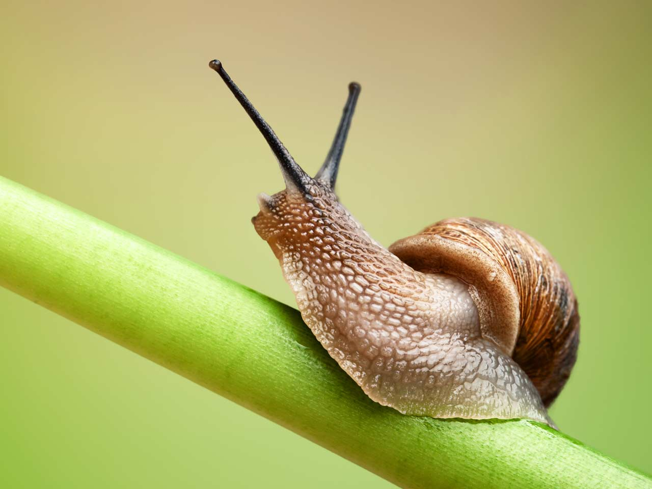 Nice Images Collection: Snail Desktop Wallpapers