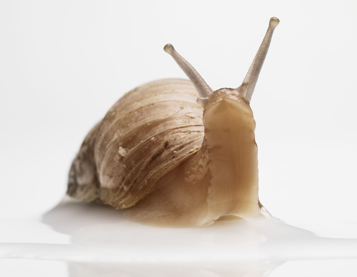Amazing Snail Pictures & Backgrounds
