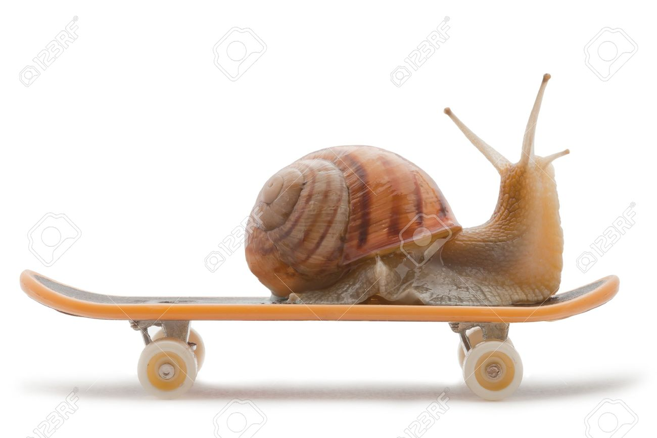 Snail High Quality Background on Wallpapers Vista