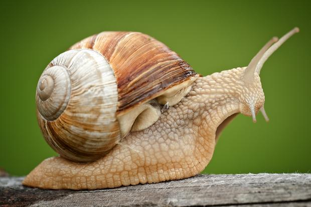 Snail Pics, Animal Collection