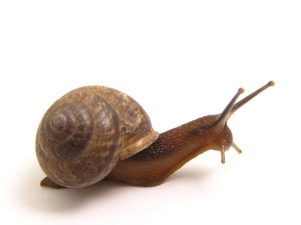 Images of Snail | 600x448