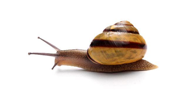 Snail Backgrounds, Compatible - PC, Mobile, Gadgets| 600x341 px