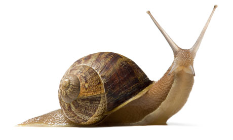 460x276 > Snail Wallpapers