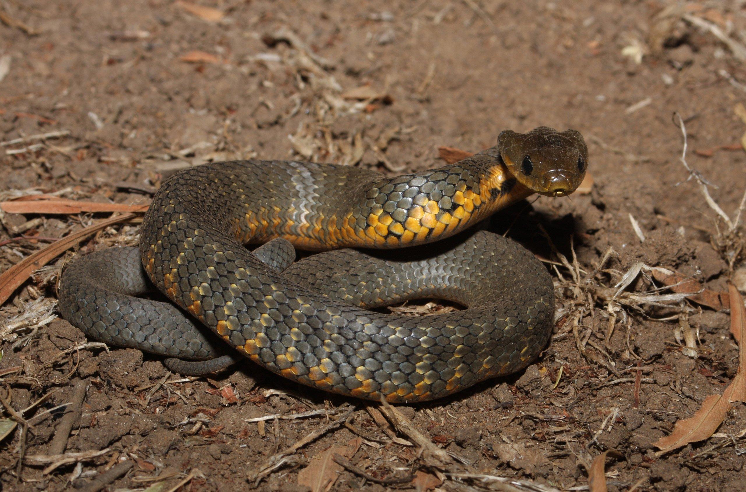 Snake #6