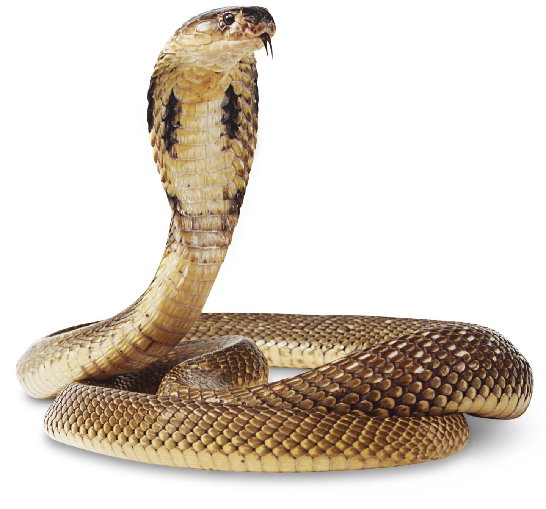 Snake #7