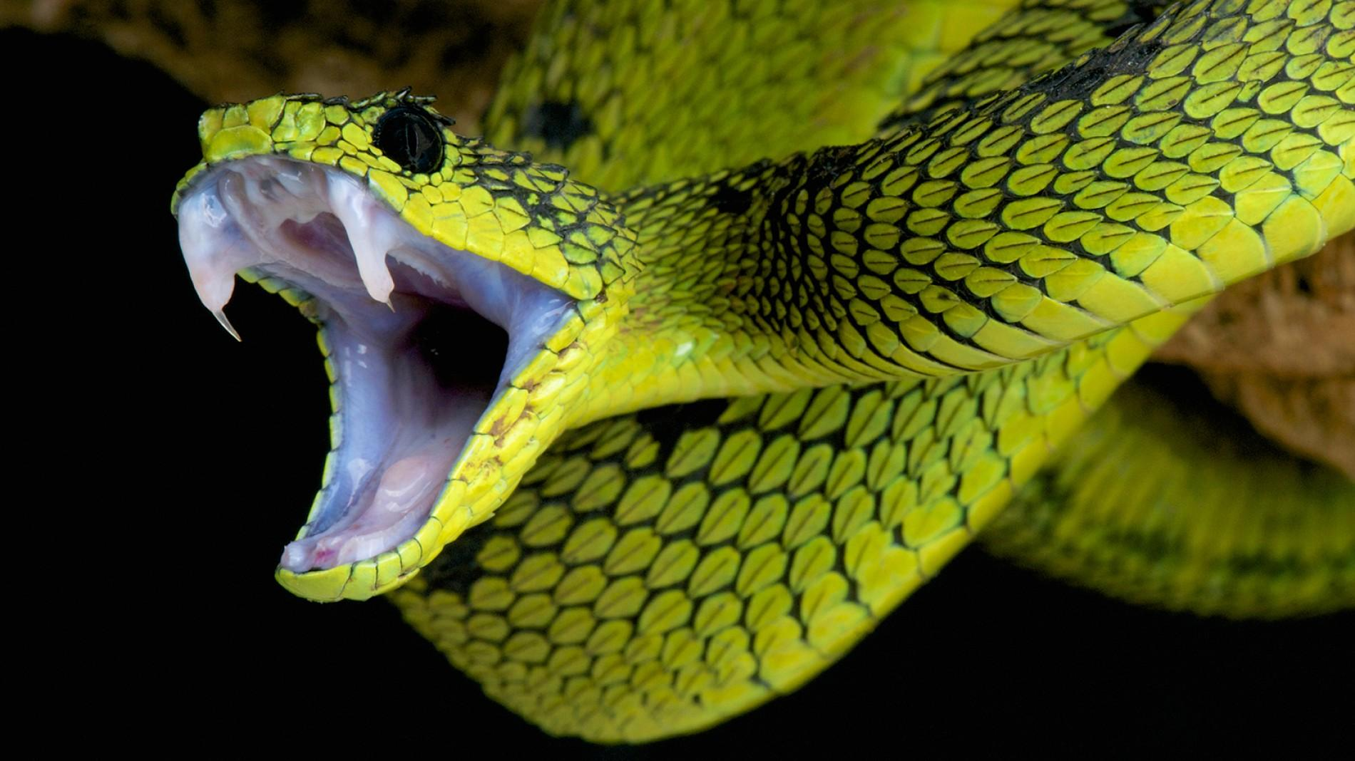 Snake HD wallpapers, Desktop wallpaper - most viewed
