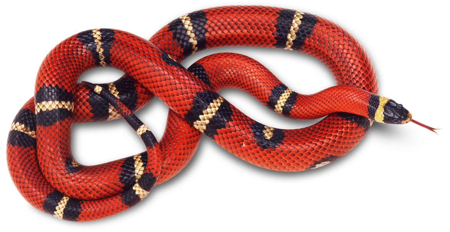 Images of Snake | 1440x745