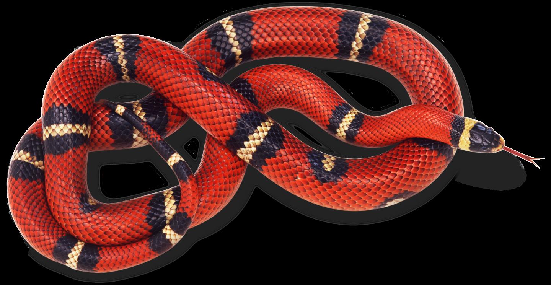 Snake #22
