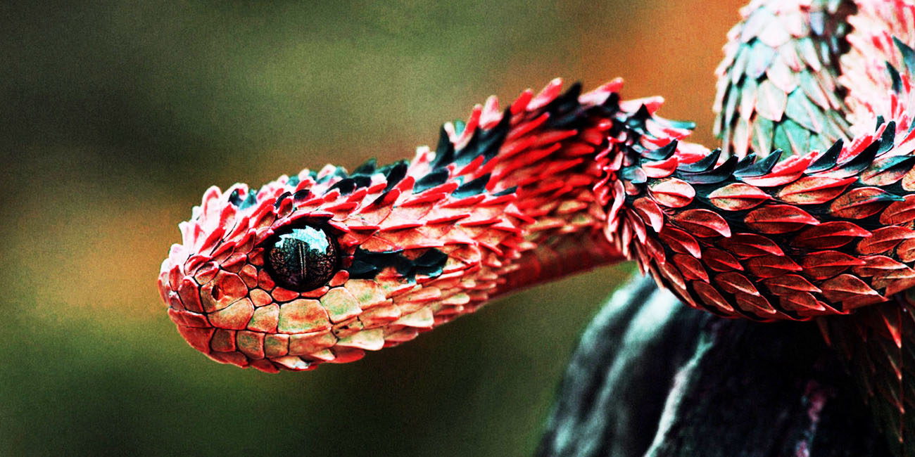 1300x650 > Snake Wallpapers