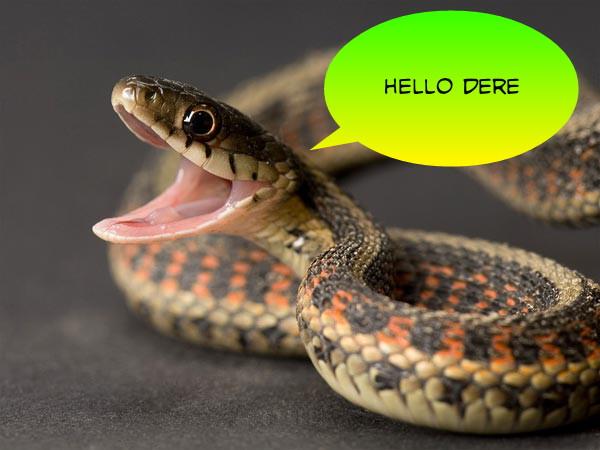 Snake #11
