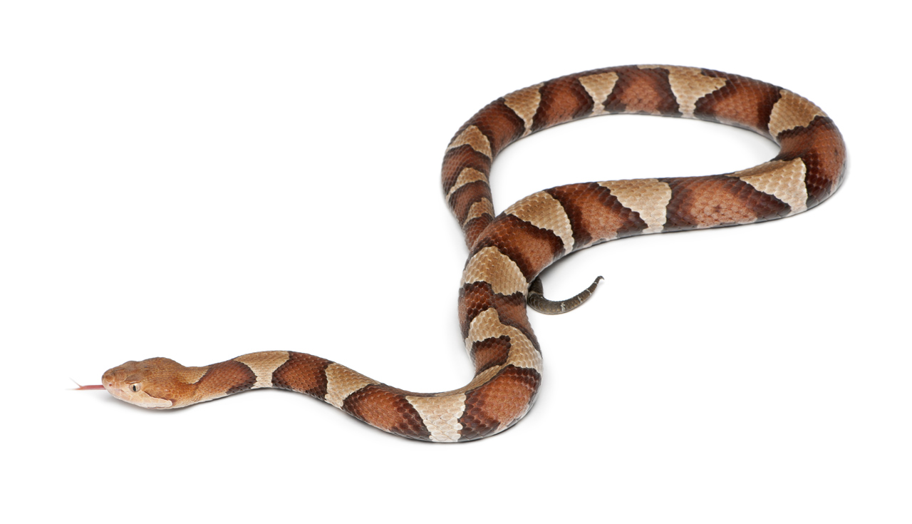 Nice Images Collection: Snake Desktop Wallpapers