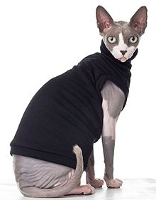 Sphynx Cat Backgrounds, Compatible - PC, Mobile, Gadgets| 220x281 px