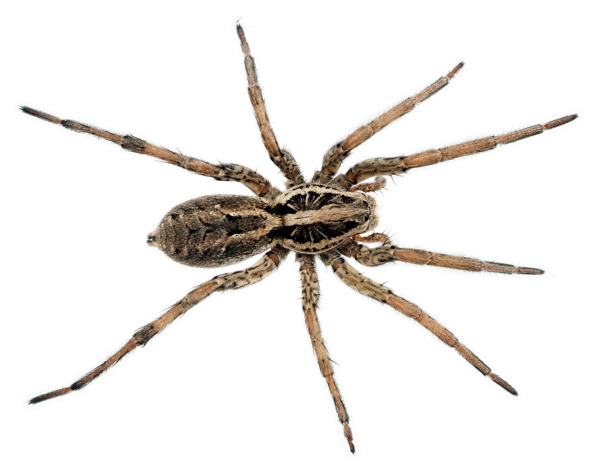 Spider Pics, Animal Collection