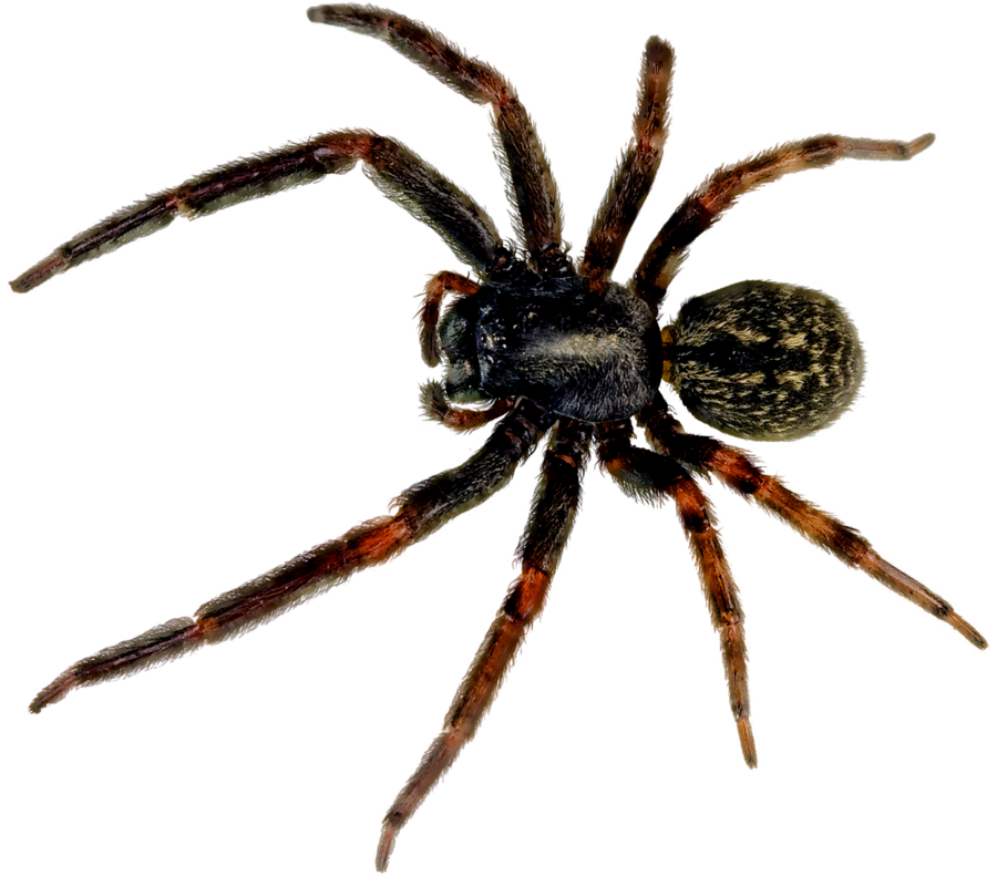 HQ Spider Wallpapers | File 444.36Kb