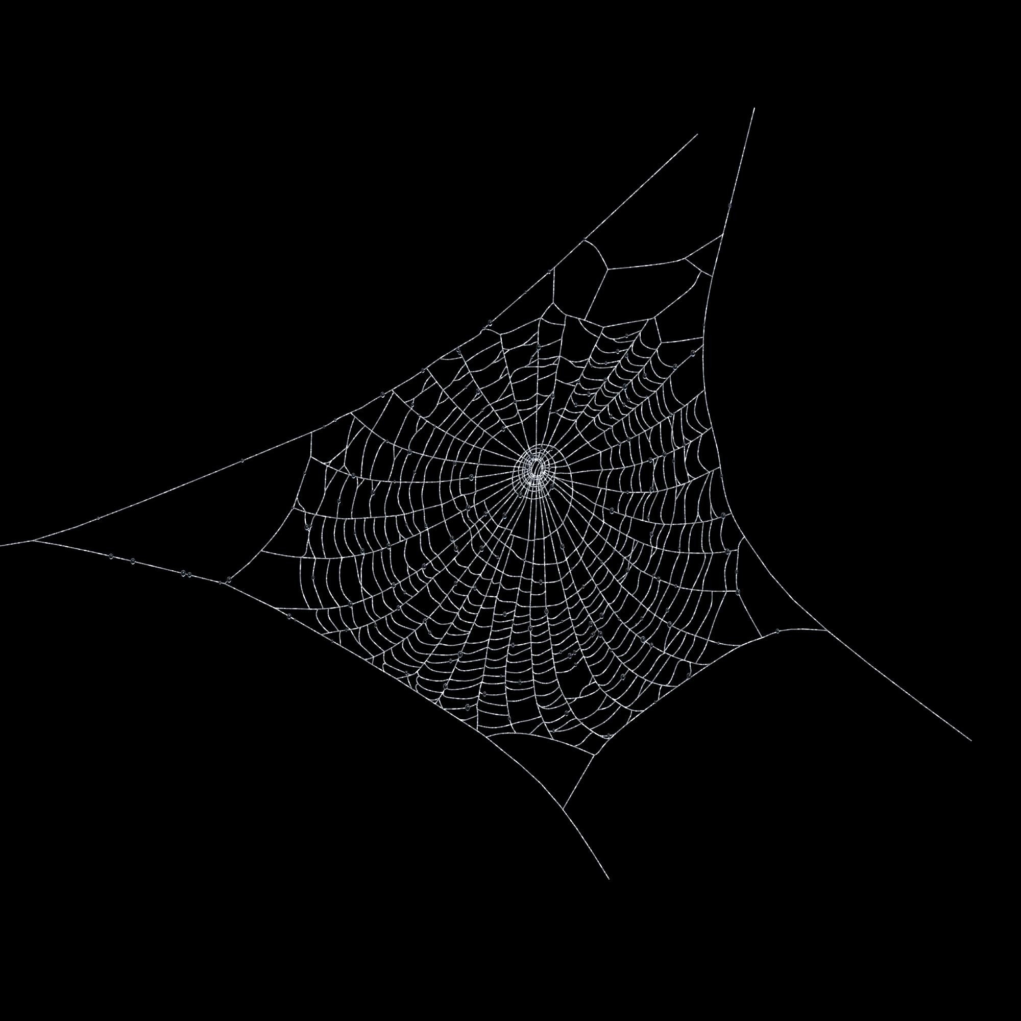 Nice Images Collection: Spider Web Desktop Wallpapers