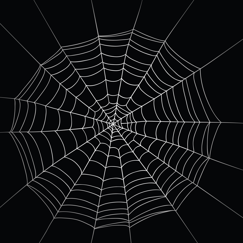 High Resolution Wallpaper | Spider Web 3000x3000 px