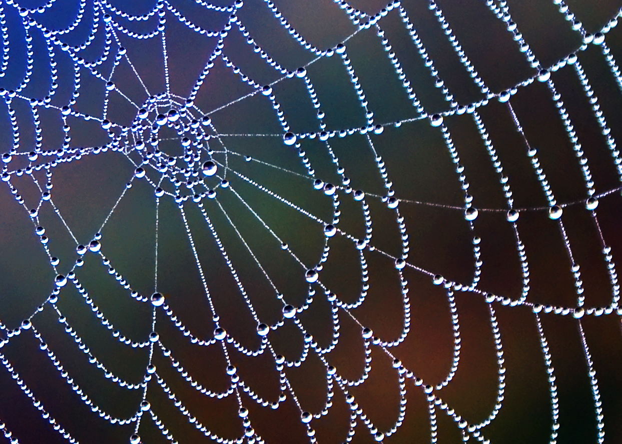 Spider Web Pics, Photography Collection
