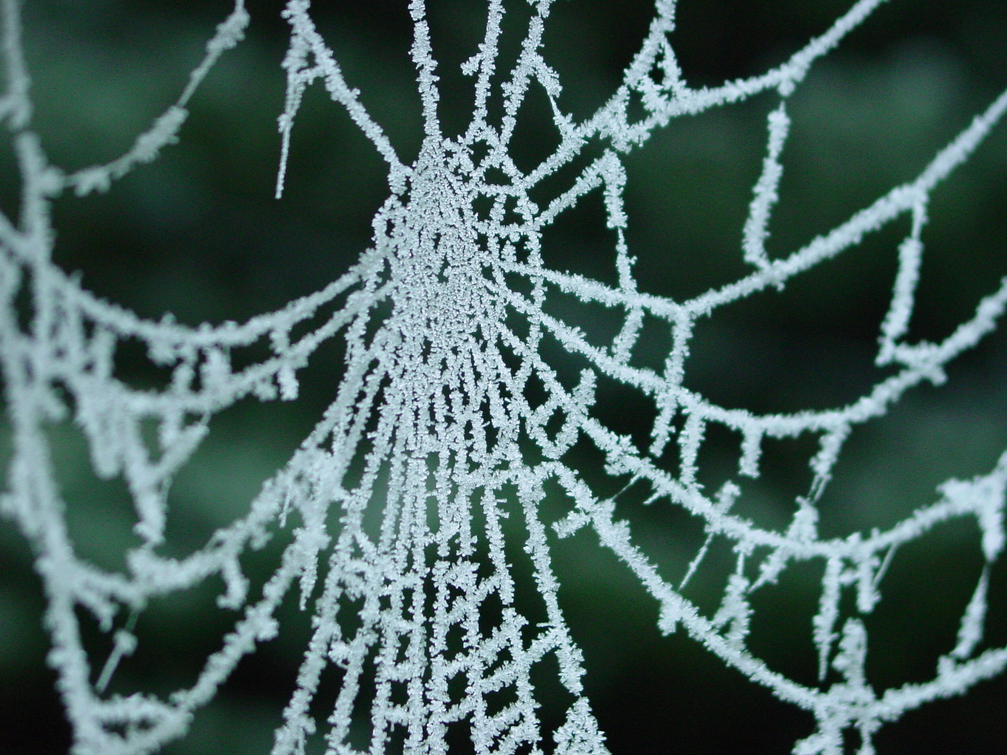 Amazing Spider Web Pictures & Backgrounds
