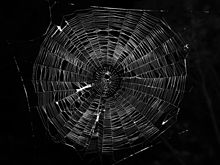 Spider Web Backgrounds on Wallpapers Vista