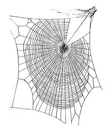 Spider Web HD wallpapers, Desktop wallpaper - most viewed