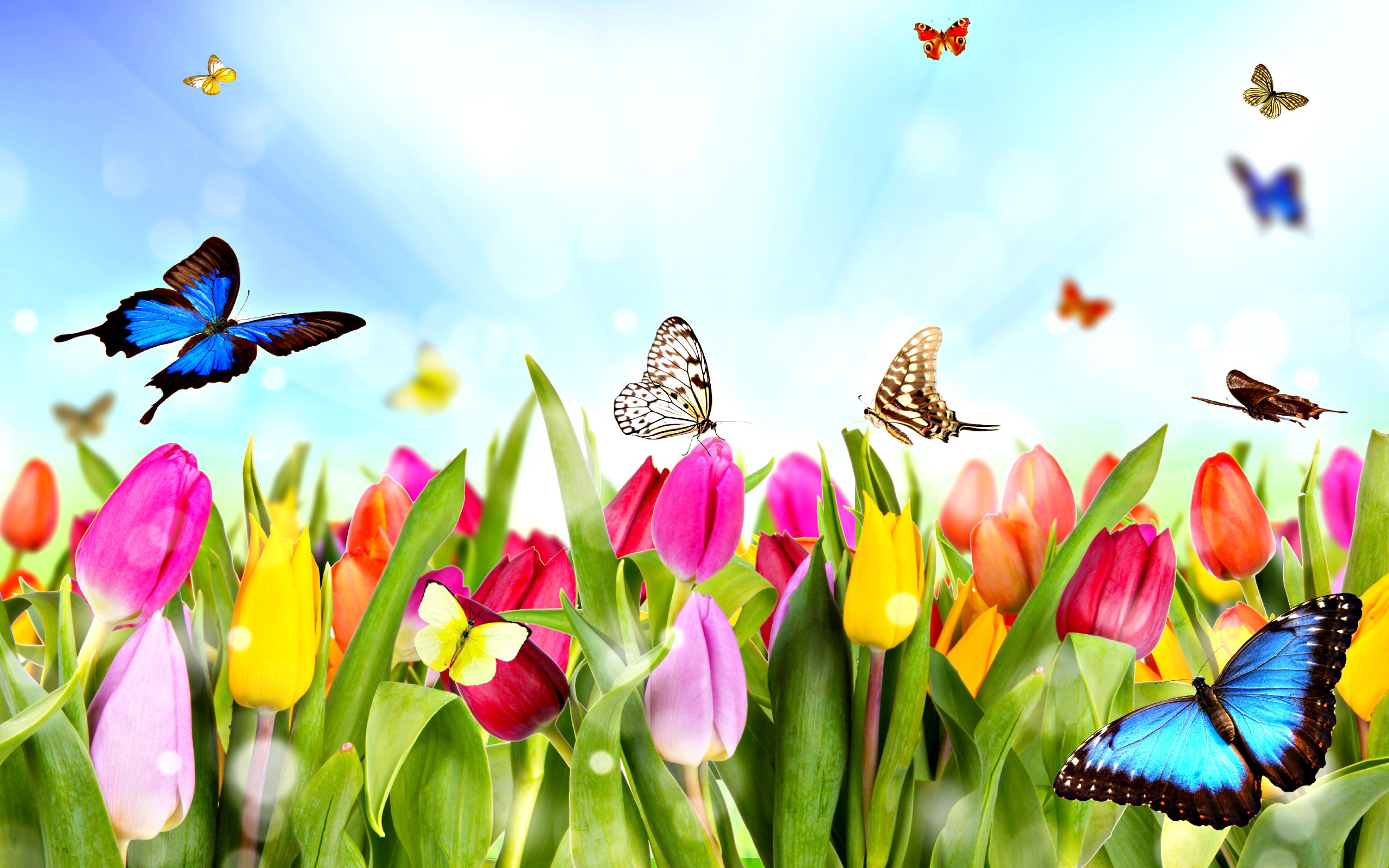 HQ Spring Wallpapers   File 2179.94Kb