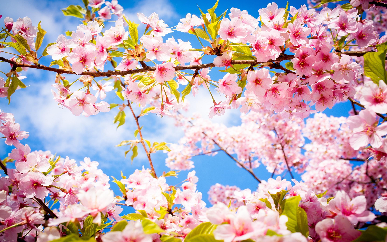 Spring #2