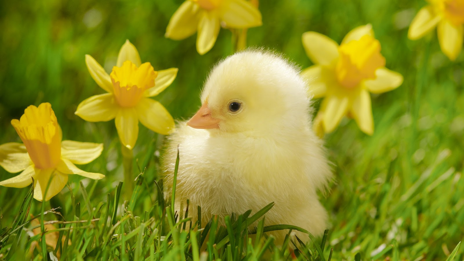 Spring High Quality Background on Wallpapers Vista