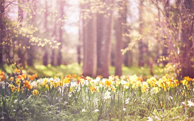 High Resolution Wallpaper   Spring 620x388 px
