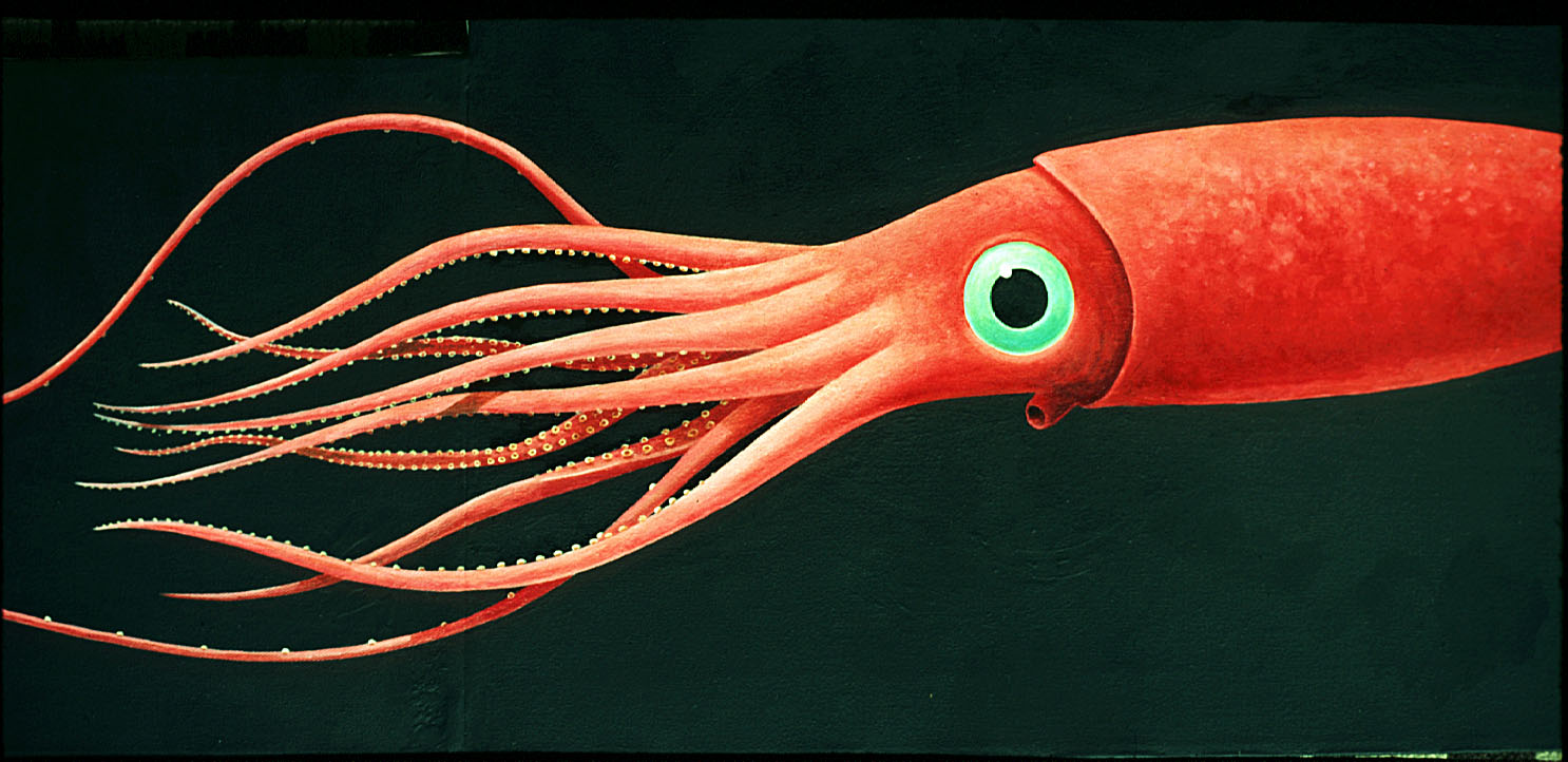 HD Quality Wallpaper | Collection: Animal, 1486x722 Squid