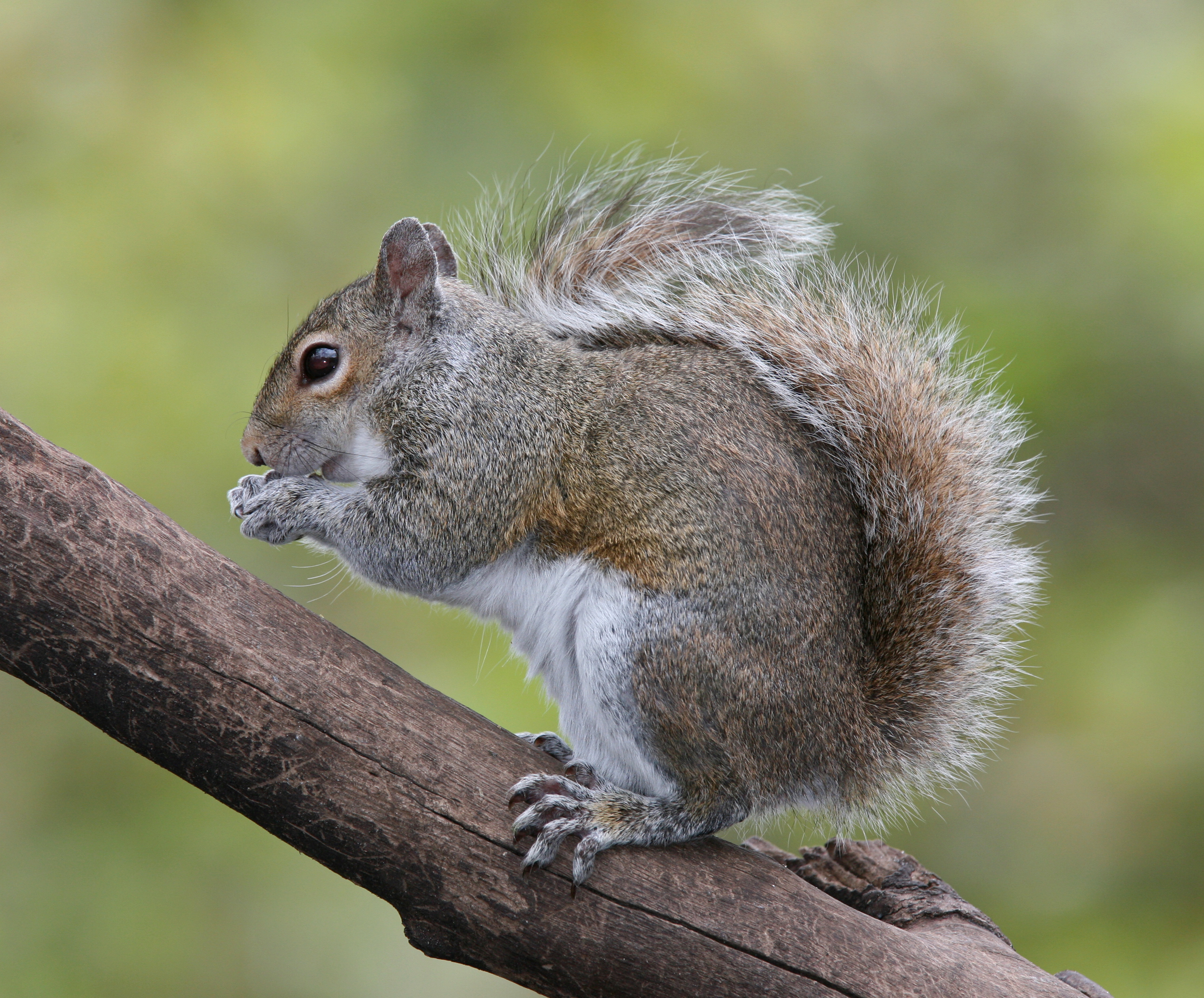 Amazing Squirrel Pictures & Backgrounds