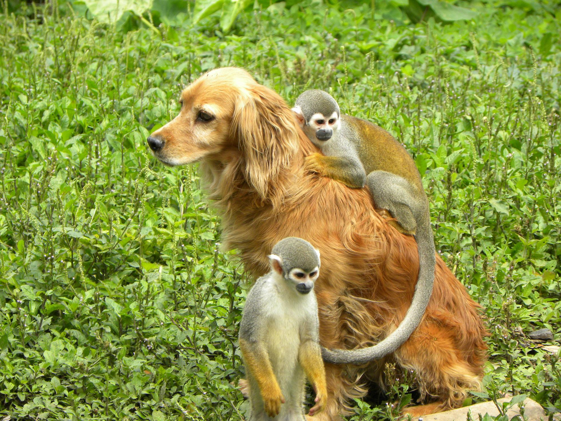 Squirrel Monkey Backgrounds on Wallpapers Vista