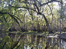 Nice Images Collection: St. Johns River Desktop Wallpapers