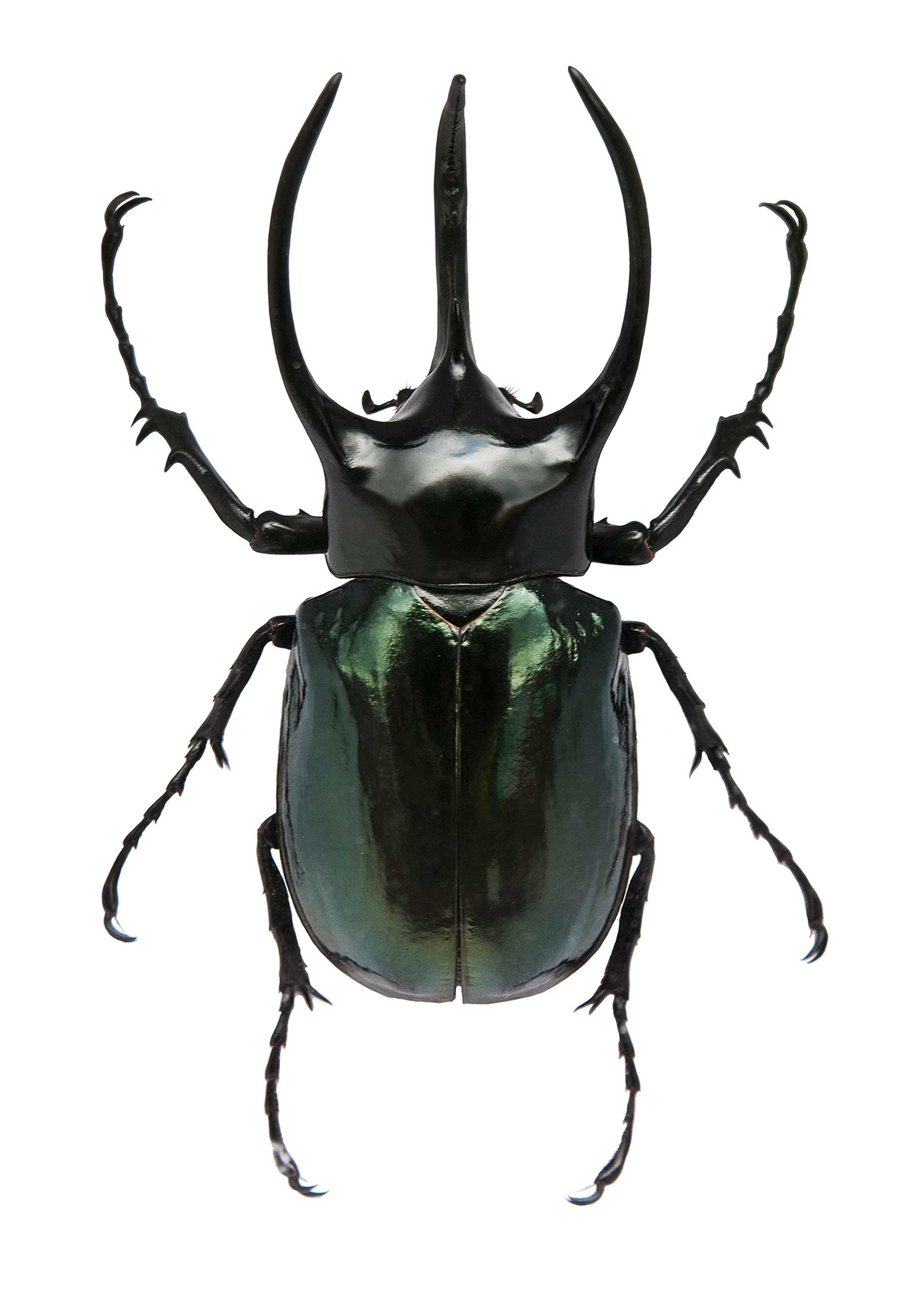 Images of Stag Beetle | 3428x4780