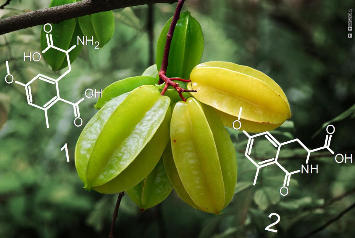 Nice Images Collection: Star Fruit Desktop Wallpapers