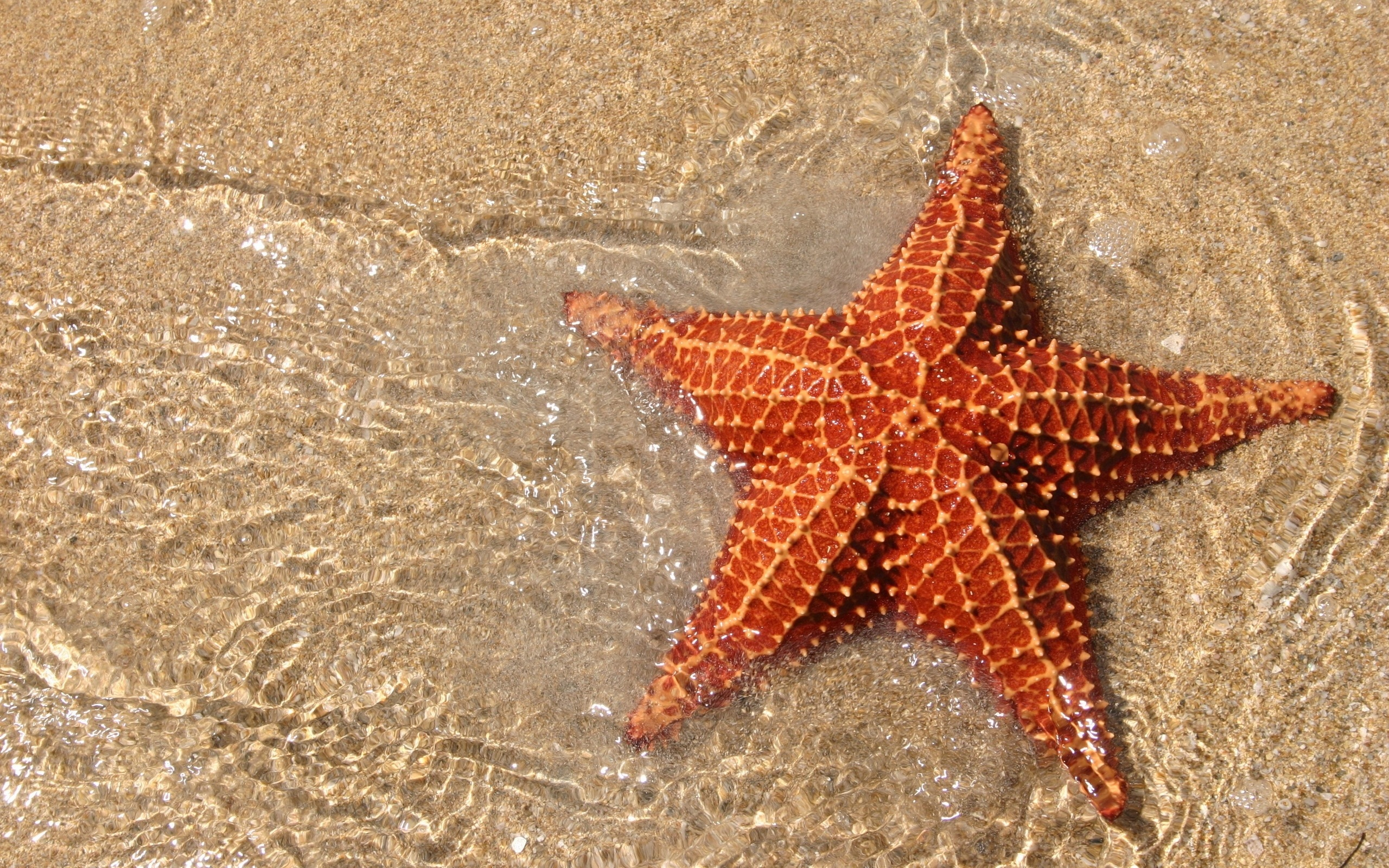 Starfish Pics, Animal Collection