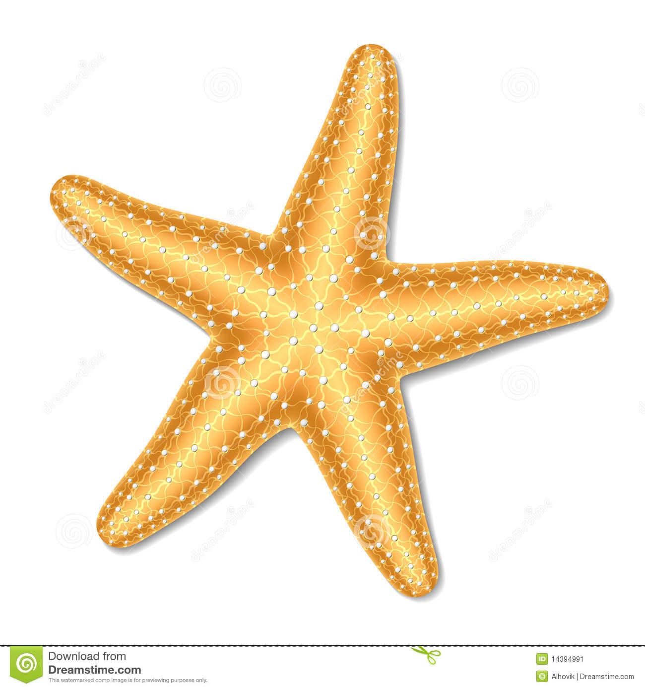 Images of Starfish | 1300x1390