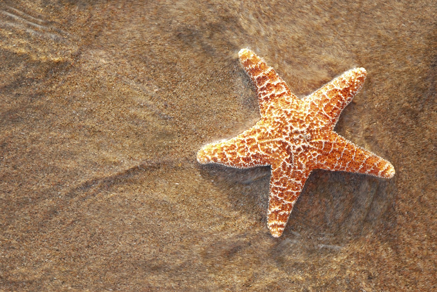 Amazing Starfish Pictures & Backgrounds