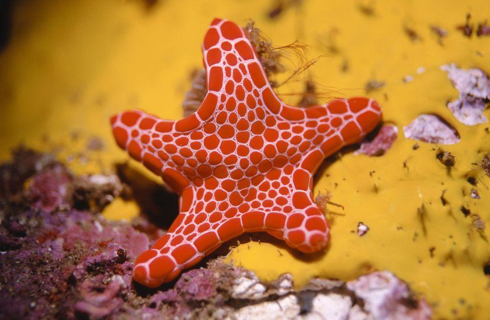 HQ Starfish Wallpapers | File 81.49Kb