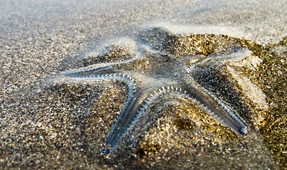 Starfish Backgrounds on Wallpapers Vista