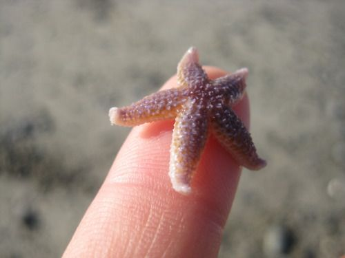 Nice Images Collection: Starfish Desktop Wallpapers