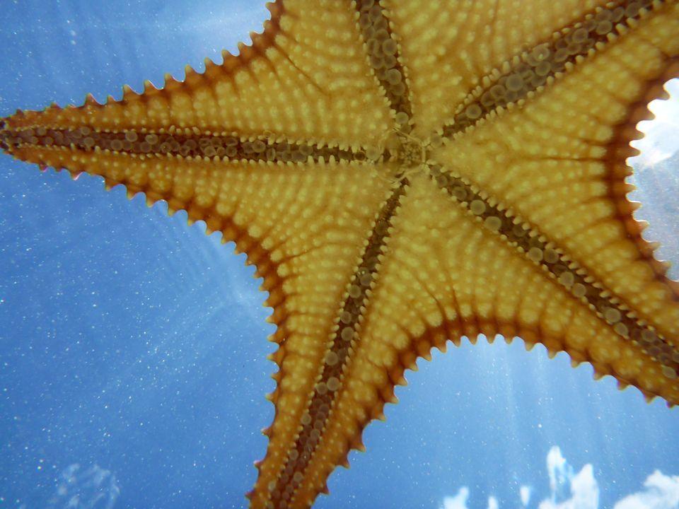 High Resolution Wallpaper | Starfish 960x720 px