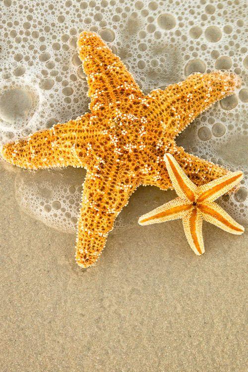 HQ Starfish Wallpapers | File 103.15Kb