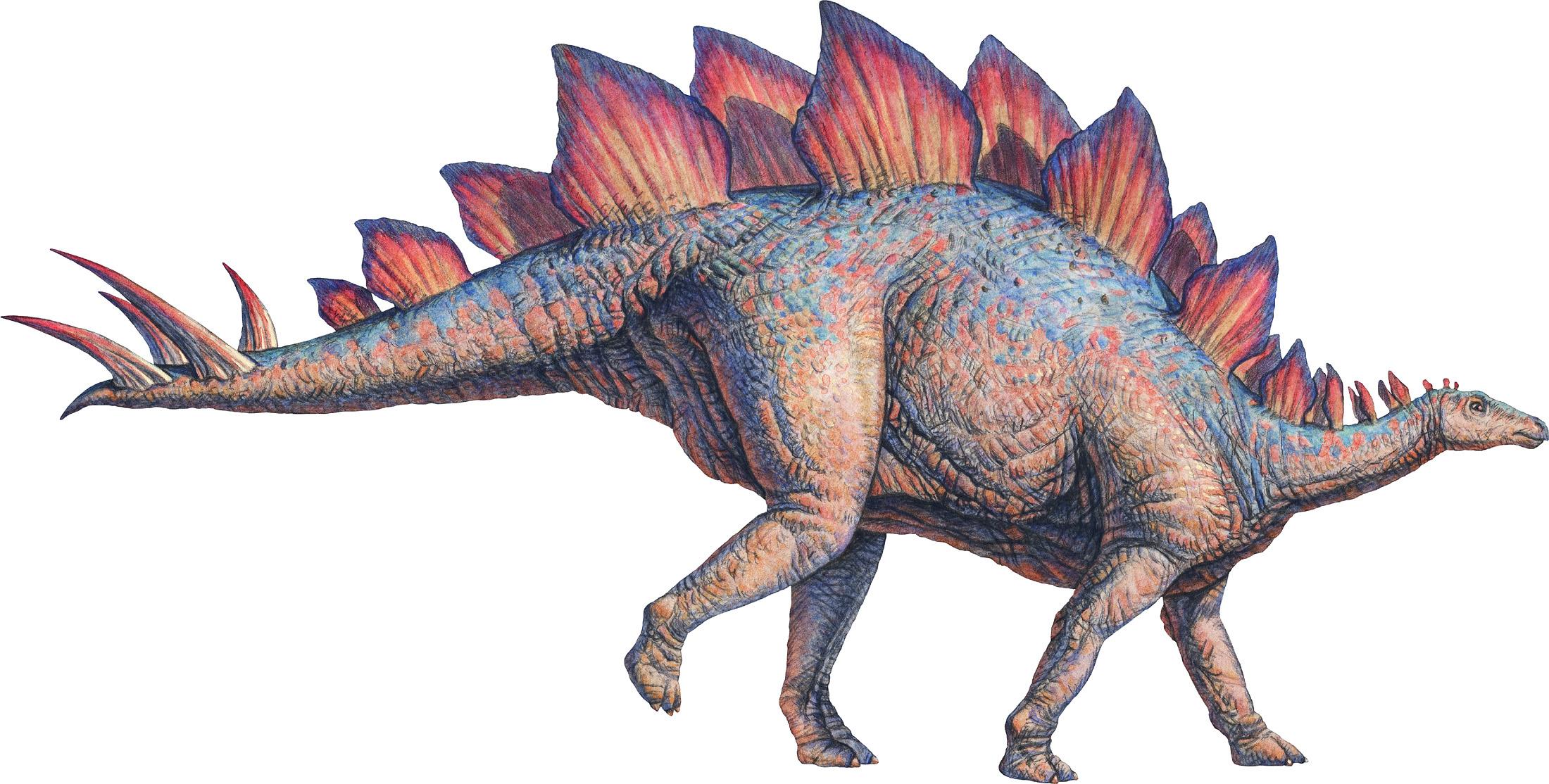 Nice Images Collection: Stegosaurus Desktop Wallpapers
